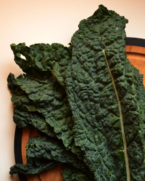 Tuscan Kale (DSC_1025)