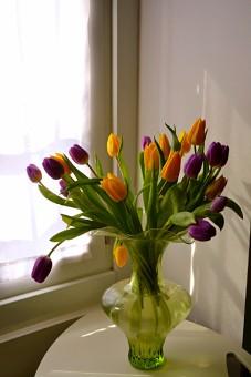 Tulips (DSC_0460)