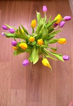 Tulips (DSC_0466)